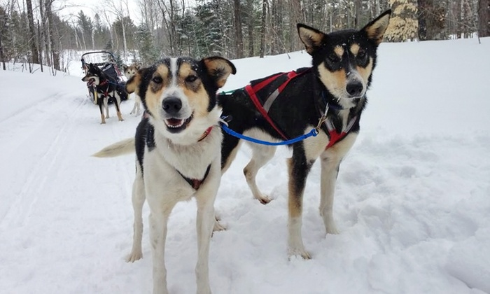 Nature's Kennel - Nature's Kennel: Dog Sledding Excursion from Nature's Kennel (Up to 43% Off). 12 Options Available.