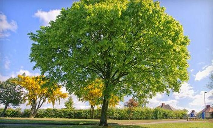 B&B Tree Service - Lexington: $90 for $100 Worth of Tree-Trimming Services — B&B Tree Service