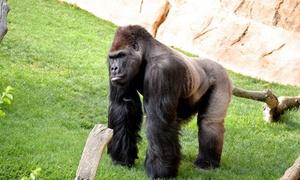 Bioparc Fuengirola: Entrada para una persona al zoológico Bioparc de Fuengirola por 14 €
