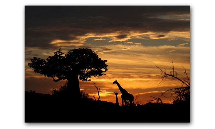 Africa In Picture - Edenvale: Canvas Prints from Africa In Picture