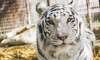 Up to 55% Off Zoo Tour at Rancho Las Lomas Wildlife Foundation