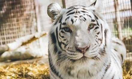 90-Minute Zoo Tour for 2, 5, or 10 at Rancho Las Lomas Wildlife Foundation (Up to 55% Off)