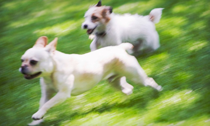 All Wags Doggie Daycare & Boarding - Montclaire South: Doggy Daycare or Boarding at All Wags Doggie Daycare & Boarding (Up to 55% Off). Three Options Available.