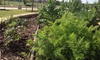Earth Rebirth - Oklahoma City: $6 for $11 Worth of Gardening Services — Earth Rebirth