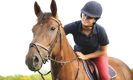 One, Three, or Five Horseback Riding Lessons at Willow Creek Equestrian Center, LLC (Up to 52% Off)