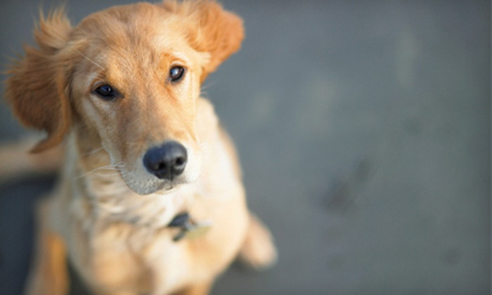 Doggie Doos and Don'ts - Downtown: One or Six Months of Weekly Pet Cleanup or One Month of Semiweekly Service from Doggie Doos and Don'ts (Up to 73% Off)