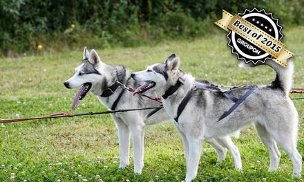 Husky-Schlittentour für 2 Personen und 1 Kind oder 4 Personen und 2 Kinder bei polarlicht-huskyfarm (bis zu 50% sparen*)