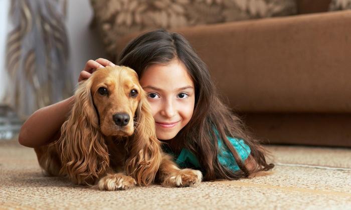 New Life Dry Carpet Care - Atlanta: One Hour of Cleaning Services from New Life Dry Carpet Care (55% Off)