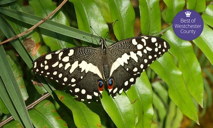 Butterfly-Exhibit Visit for Two, Four Mommy and Me Classes, or Visit for Four at World of Wings (Up to 50% Off)
