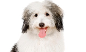 Groomingdales Pet Salon: Classic Retouch Grooming Package from Groomingdales Pet Salon (50% Off)