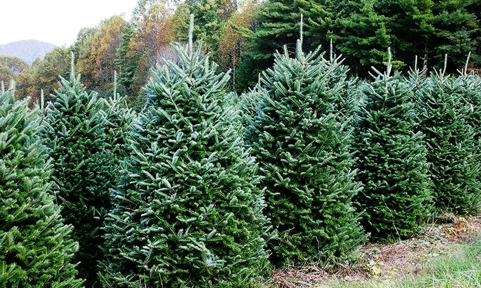 BL Christmas Trees: Home-Delivered Wreath or Balsam or Fraser Fir Tree from BL Christmas Trees (Up to 51% Off). Shipping Included.