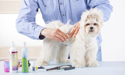Dog Grooming at Carriage Hills Animal Hospital and Pet Resort (Up to 51% Off). Four Options Available.