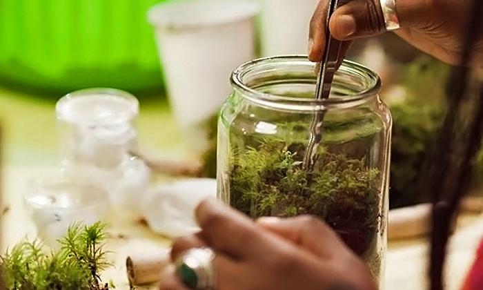 Terrarium-Making Class - Twig Terrariums: Make a Moss Terrarium with the Owners of Twig Terrariums