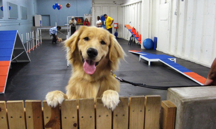 Zoom Room - Philadelphia: Four Private Dog-Gym Sessions and Evaluation or Three Training Classes and Evaluation at Zoom Room (Up to 51% Off)