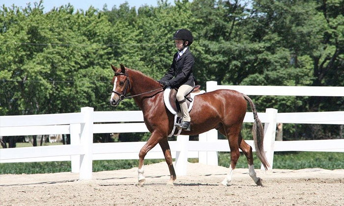 Stonewood Equestrian - Pickering: C$199 for Eight Group Horseback-Riding Lessons at Stonewood Equestrian (C$470 Value)