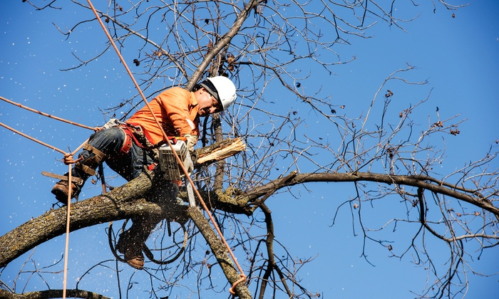 Mahner Tree Service - Wood Park: $199 for $450 Toward Tree Trimming, Removal, or Bush-Sculpting Services from Mahner Tree Service