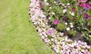 44% Off Landscaping