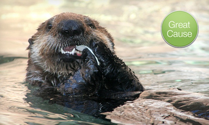 Seattle Aquarium - Pike Place  Market: $10 or $45 Donation to Help Feed Otter