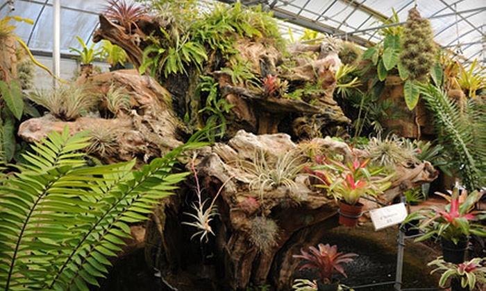 Rainforest Flora - West Torrance: $20 for $40 Worth of Plants and Garden Accessories at Rainforest Flora
