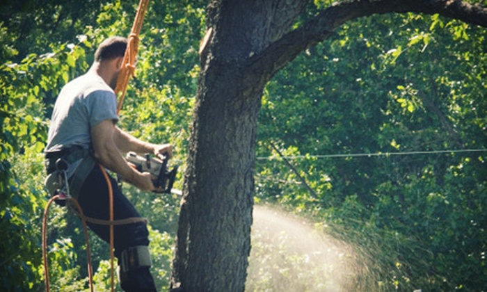 Ben's Tree Service - Upper Hominy: Tree Trimming or Removal from Ben's Tree Service (Up to 67% Off). Two Options Available.