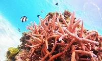 初めてのダイビングは、沖縄で海で≪2日間/PADIオープンウォーター/Cカードライセンス取得/1名分~4名分≫ @ココマジックダイビング...