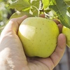 Activité cueillette de fruits et légumes