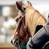51% Off Horse-Riding Lessons