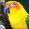 Up to 60% Off Tours at Animal Adventures in Bolton