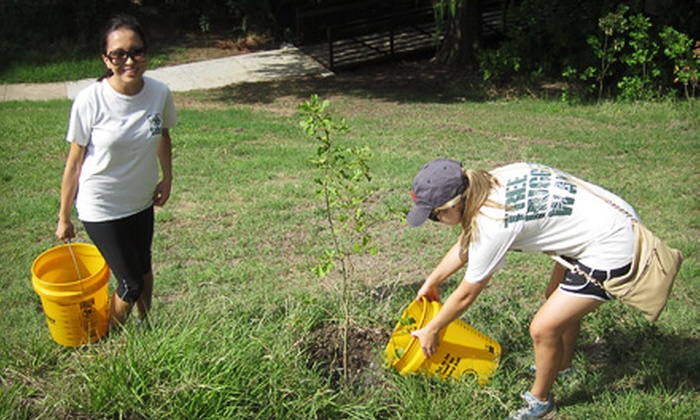 Trees for Houston - Willow Meadows/ Willowbend Area: If 45 People Donate $10, Then Trees for Houston Can Water & Maintain Six Trees Affected by This Summer's Drought