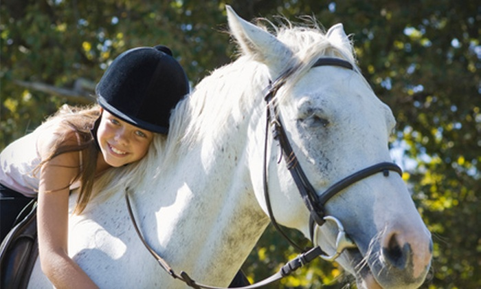 MG Sport Horses - Apopka: $25 for a One-Hour Private Horseback-Riding Lesson at MG Sport Horses in Apopka ($55 Value)