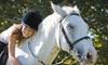 55% Off Horseback-Riding Lesson in Apopka