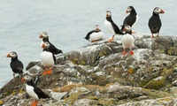 Seal and Puffin Watching Tour with Anglesey Boat Trips