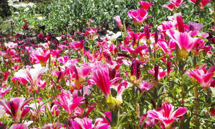 Yerba Buena Nursery - Half Moon Bay: $15 for $30 Worth of Native California Plants or Two 1-Gallon Plants with Wildflower Seeds at Yerba Buena Nursery