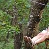 Half Off ZipQuest Zipline Canopy Tours