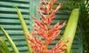 Island View Nursery - Carpinteria: $10 for $20 Worth of Plants and Flowers at Island View Nursery