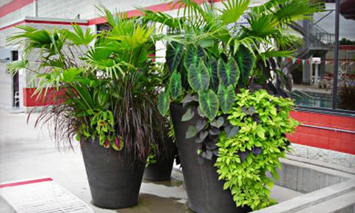 The Plant Professionals - DeWitt: $15 for $30 Worth of Patio Baskets, Pots, or Flats at The Plant Professionals