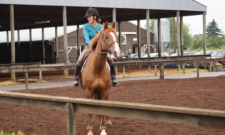 One Horseback-Riding Lesson or One Month of Horseback-Riding Lessons at Hylee Training- Equisice (Up to 52% Off)