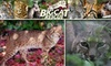 Big Cat Rescue - Easy St: $25 for a 90-Minute Guided Tour of Big Cat Rescue