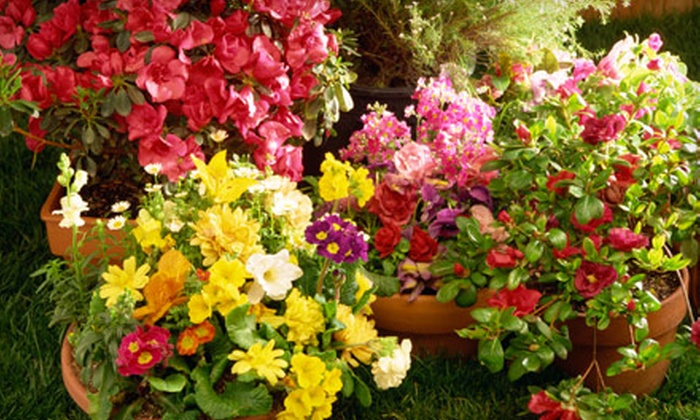 McDonnell Horticulture Inc. - Cameron: $25 for $50 Worth of Plants and Trees from McDonnell Horticulture Inc. in Cameron