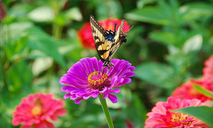 Garden Happy! - Center Grove: $25 for a Three-Hour Gardening Class at Garden Happy! in Summerfield ($50 Value)