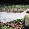 (G-Team) American Community Garden Association - Franklin Park: If 50 People Donate $10, Then American Community Gardening Association Can Host a Trainer at a Gardening Session