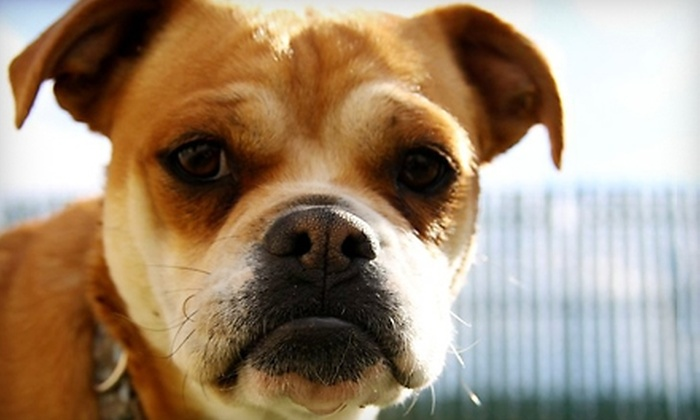 Beck 'n Coll Pet Services - Albuquerque: $29 for $60 Worth of Daycare, Boarding, Grooming, and More at Beck 'n Coll Pet Services