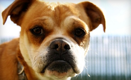 $60 Groupon to Beck 'n Coll Pet Services - Beck 'n Coll Pet Services in Albuquerque