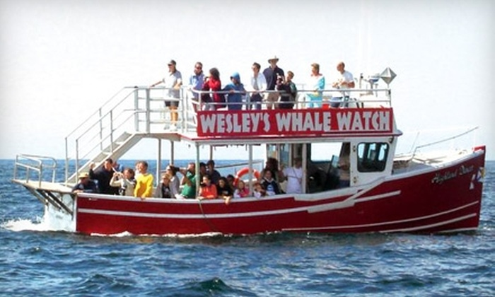 Wesley's Whale Watching - Pleasant Bay: Single or Family Whale-Watch Tour Admission to Wesley's Whale Watching in Pleasant Bay