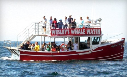 Wesley's Whale Watching: One Admission to a Two-Hour Whale-Watch Tour - Wesley's Whale Watching in Pleasant Bay