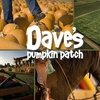 54% Off at Dave's Pumpkin Patch