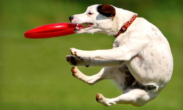 Greymont Kennel - Fairview: $25 for $50 Worth of Pet-Boarding Services or Classes at Greymont Kennel