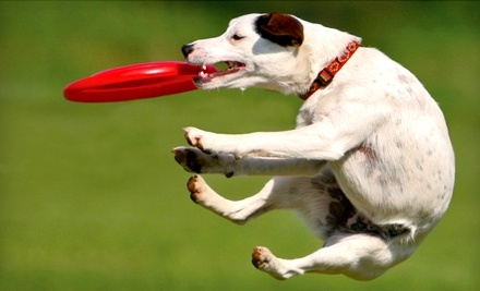 $50 Groupon to Greymont Kennel - Greymont Kennel in Fairview