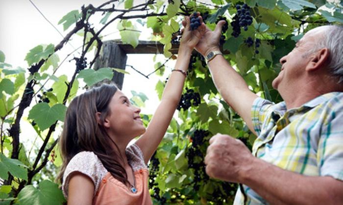 Mitillini Vineyards - Live Oak: $20 for 10 Pounds of You-Pick Grapes at Mitillini Vineyards in Live Oak ($40 Value)