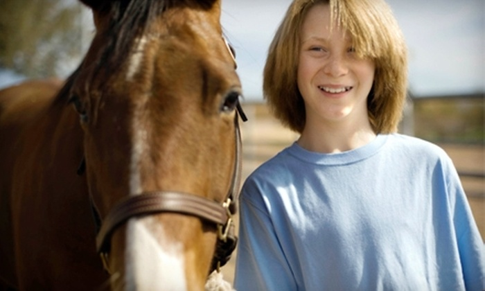 Patch Wood Farm - Sandown: $40 for Introduction to Horses Class at Patch Wood Farm in Sandown ($100 Value)